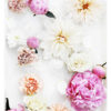Colourful Floral Wall Art -Floral Art Print with Pink Peonies White Dahlias Orange Flowers