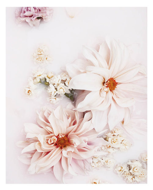 Pale Floral Art Print - Floral Wall Art with Pale Pink Dahlia Flowers and Petals