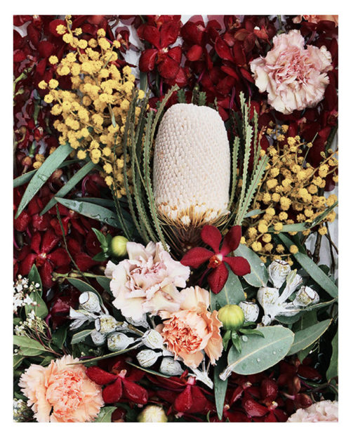 Australian Native Photographic Art Print - Australian Native Floral Photographic Wall Art - Banksia Flowers and Orchids