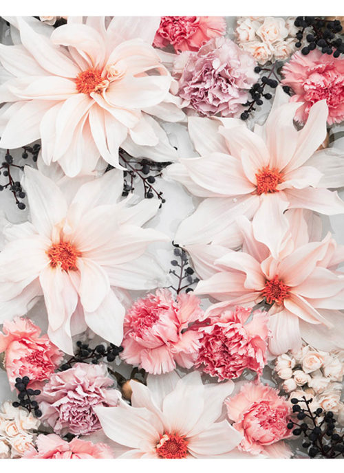 Blush Pink Floral Photo Wall Art - Blush Pink Floral Photo Art Print - Carnation and Dahlia Flowers