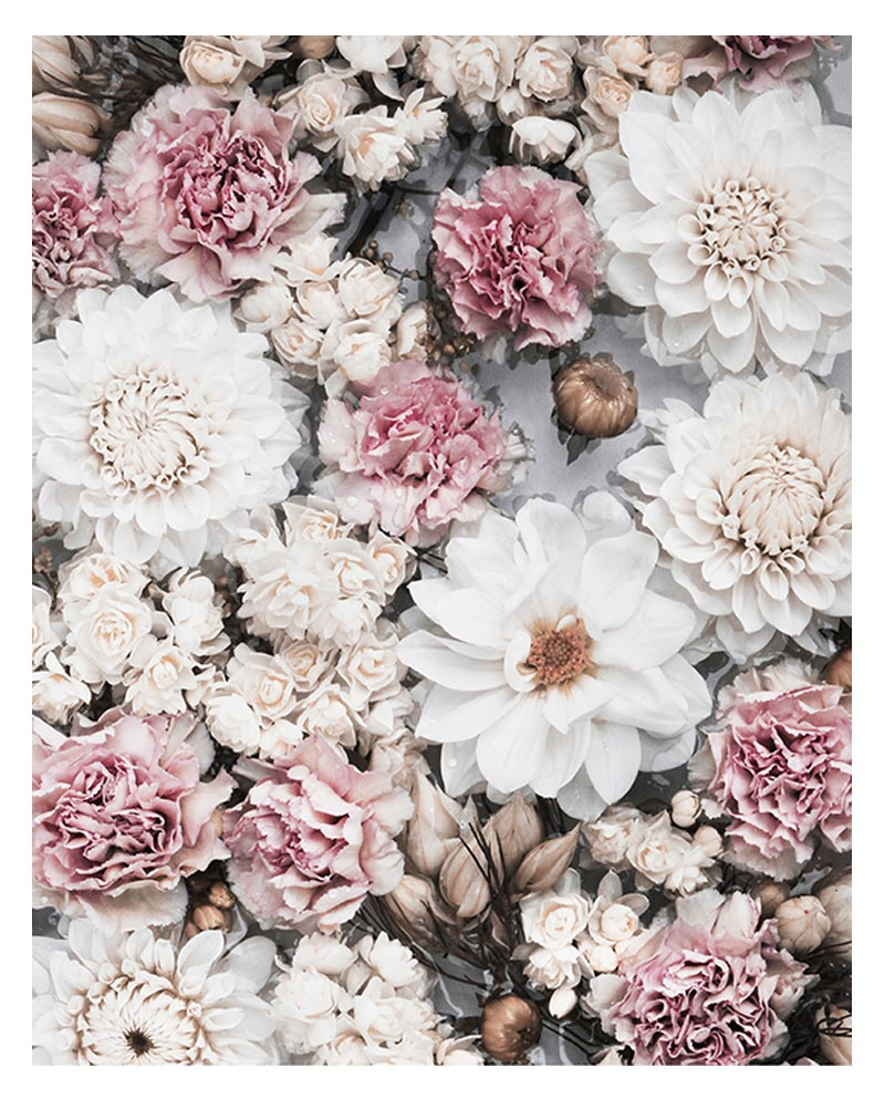 Faded Floral Petal Art Print - Faded Florals Wall Art Cream Blush Pink Dahlia and Pink Carnation Flowers