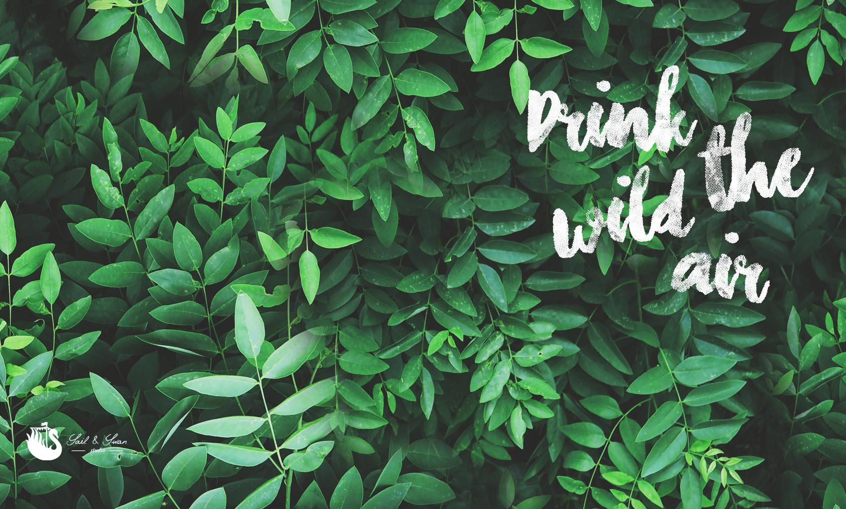 tropical desktop background drink the wild air free wallpaper green jungle leaves inspirational quote sail and swan