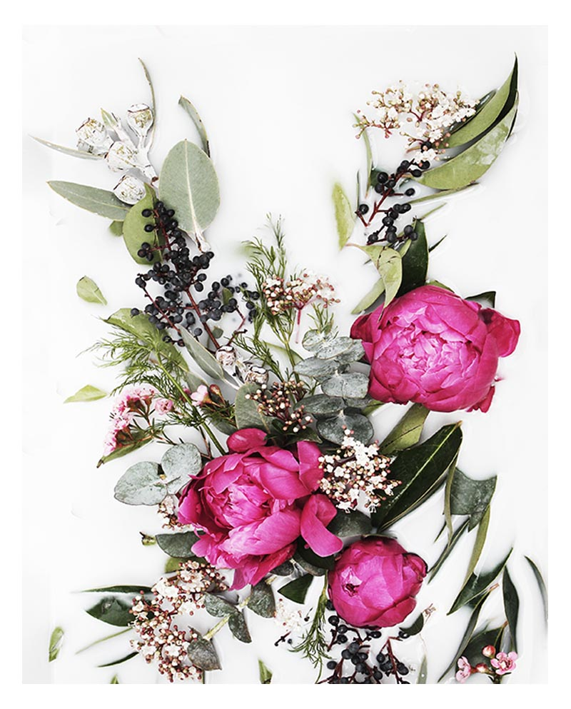 Native Botanical Wall Art - Native Floral Art Print with Deep Pink Fuchsia Peonies and Native Green Leaves