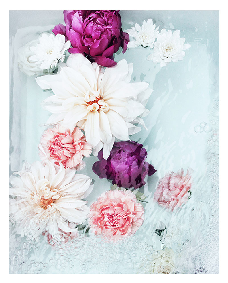 Floral Photo Wall Art - Floral Photo Art Print - Colourful Pink Purple Cream Flowers
