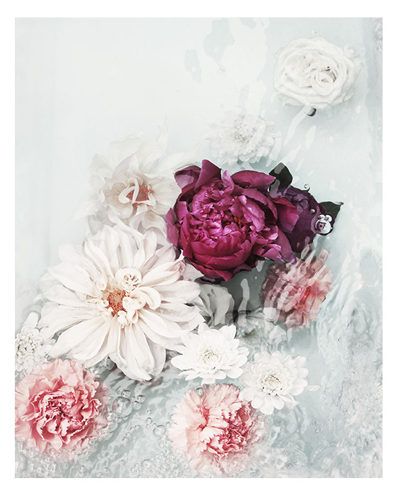Beautiful Flower Photo Wall Art - Photo Art Print - Beautiful Florals Magenta Peonies White Dahlia Flowers