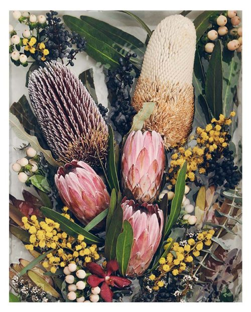 Faded Native Photo Art Print - Faded Native Floral Photo Wall Art - Protea and Banksia Flowers