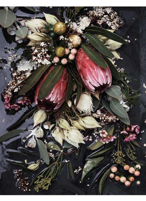 Black Native Art Print - Photo Wall Art Dark Moody Native Protea Flowers Botanicals