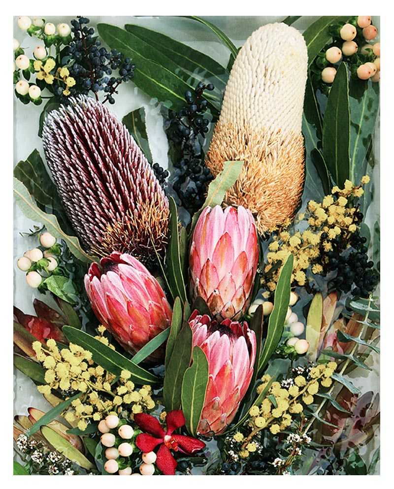 Vibrant Protea Native Botanical Photograph Print - Vibrant Protea Native Botanical Photographic Wall Art