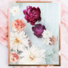Photographic Floral Art Print - Photographic Floral Wall Art - Fuchsia Peonies, Pink Flowers and White Dahlias